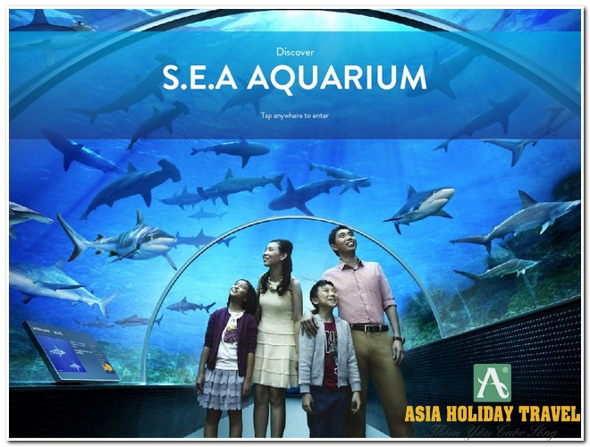 Tour du lịch Singapore - Sentosa - Garden By The Bay (SEA Aquarium)